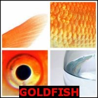 GOLDFISH- Whats The Word Answers