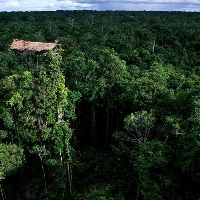 The Tree Houses of the Korowai Tribe of New Guinea