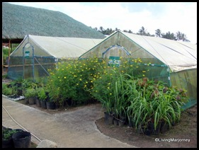 Costales Farm in Majayjay, Laguna (10)
