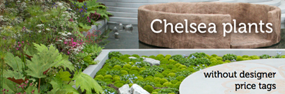 Chelsea plants without designer price tags