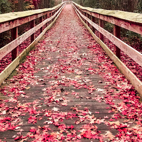 Walkway of red leaves by Carol Plummer - City,  Street & Park  City Parks ( red, autumn, trail, city park, leaves,  )