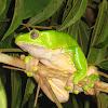 Monkey Frog
