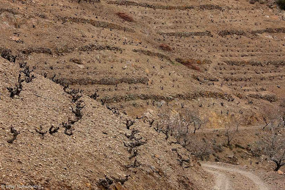 Barranc de les Escomelles, camí del Mas de la Plana del Sebes, costers de llicorella, vinyes del celler Vall Llac, DOQ Priorat, Porrera, Priorat, Tarragona