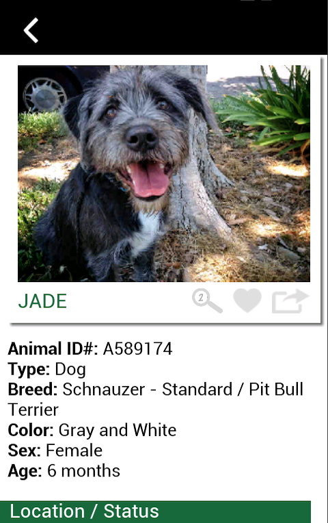 Ventura County Animal Services- screenshot