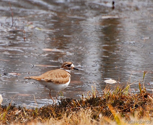 3. Killdeer CT-kab