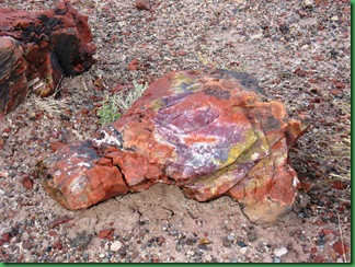 Painted Desert & Petrified Forest 385