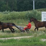 und natürlich auch Pferde auf der Trabrennbahn