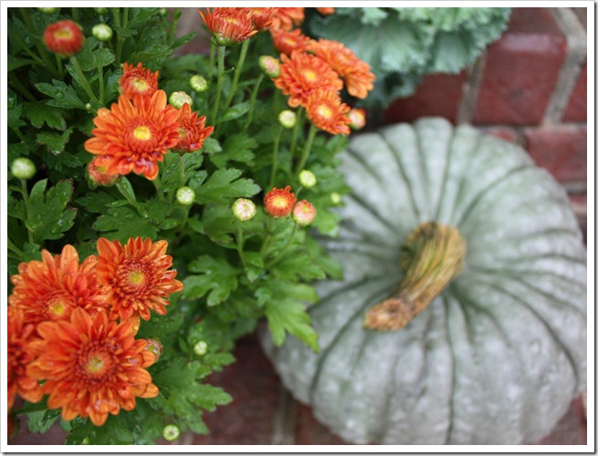 mums & heirloom pumpkin