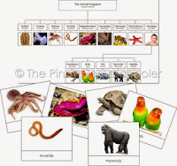 The Animal Kingdom Learning Material