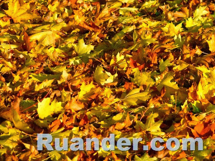 Fall Color 9 Ruander