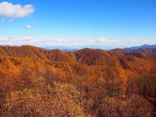 [写真]十石峠から見えるカラマツ林