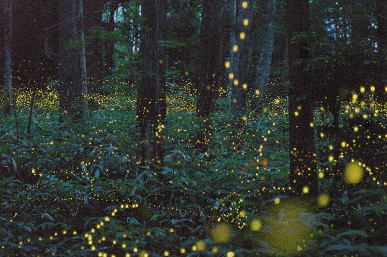 gold-fireflies-3