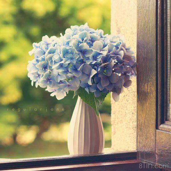 Bleu, bleu l'amour est bleu...