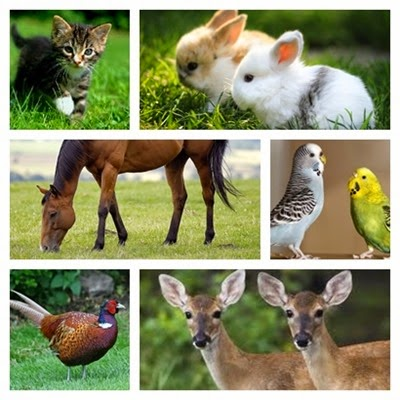 collage animals