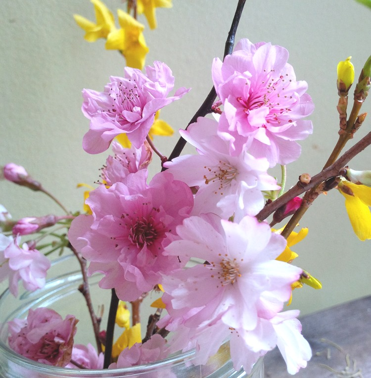 yellow and pink blossoms