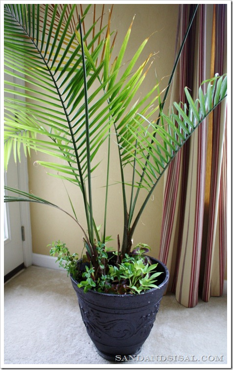 Palm with annuals  (663x1024)