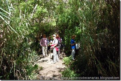 5496 La Laguna-Vueltas Acero-Firgas