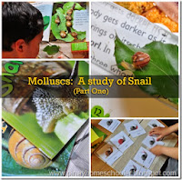 Molluscs: The Study of Snails (Part One)
