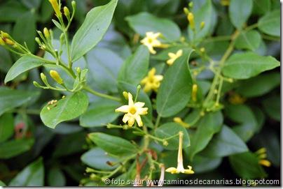 066 Subida Jinama-San Andrés(Jazmín)
