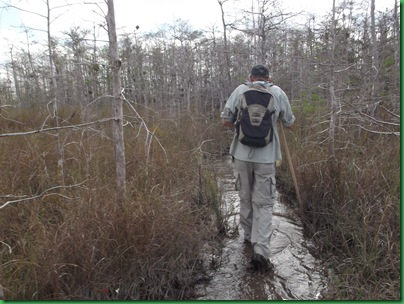 Big Cypress Swamp Hike (9)