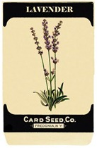 seedpacketlavender-graphicsfairy008b4sm