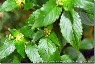 041 Sabinosa-Malpaso-Sabinosa(Ortiga mansa)