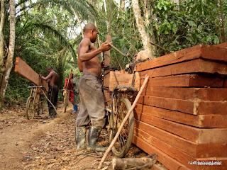 Coupe illégale de bois par des scieurs de bois artisanaux dans l'Ituri. 2006.