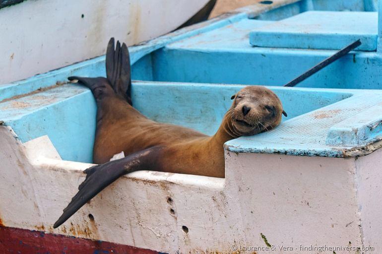 Sea lion lying in boat Galapagos