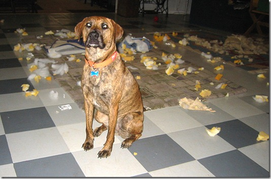 dog_destruction