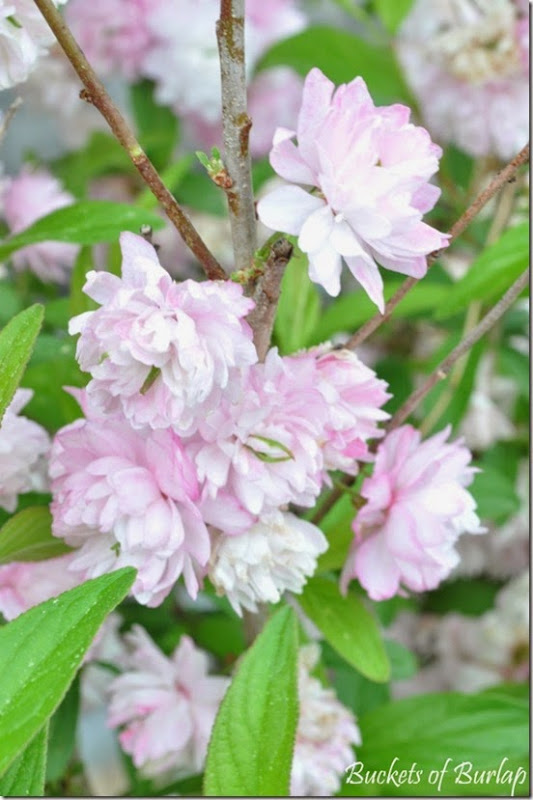 Spring garden 1