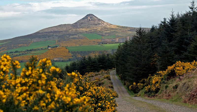 Summer on Sugarloaf-Des Byrne.jpg