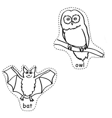 Nocturanal Animals : Owl and Bat