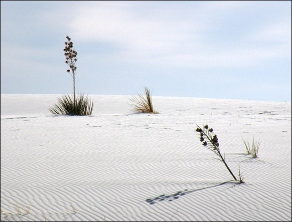 White_Sands_National_Monument_09