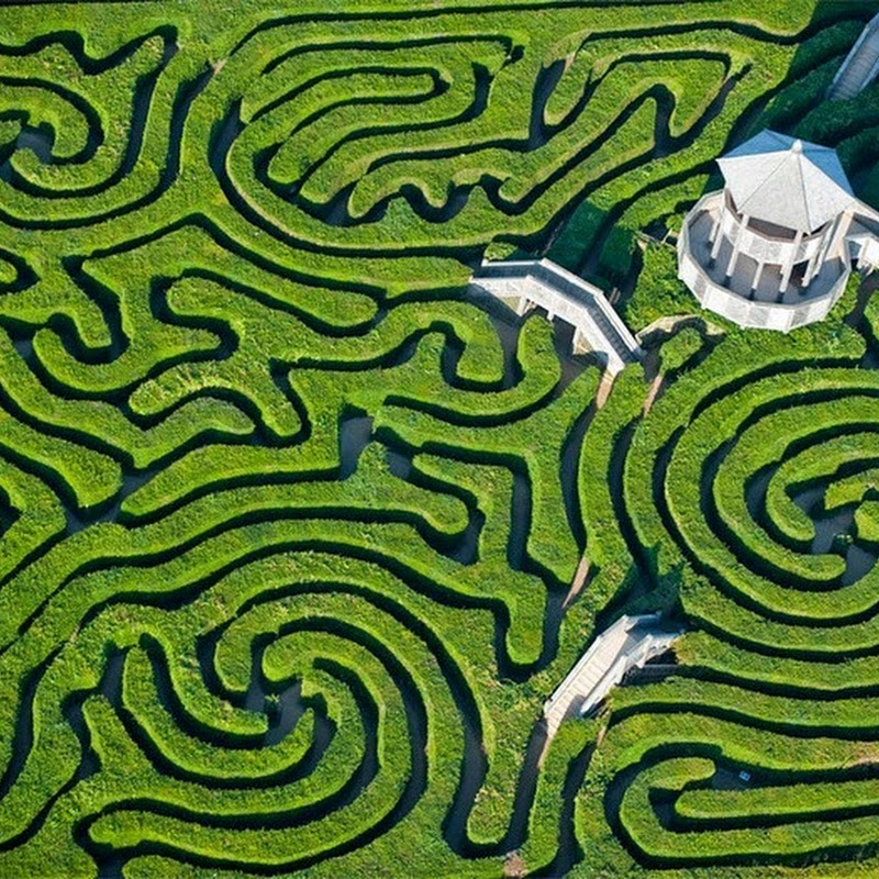 Longleat Hedge Maze: The Longest in The World