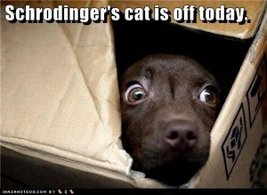 schrodingers cat is off today