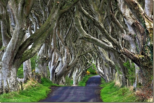 The-dark-hedges-001