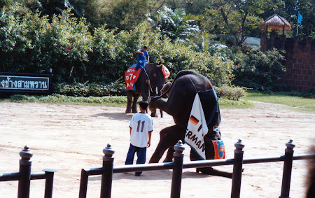 spectacol elefanti Bangkok