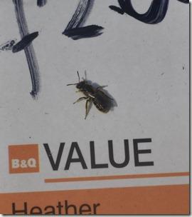 value bg