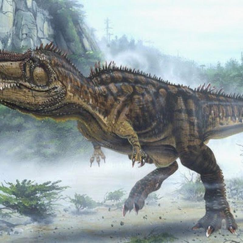 Il Giganotosaurus carolinii è il più grande dinosauro carnivoro mai esistito.