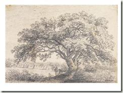 constable tree
