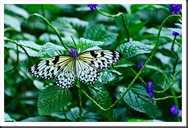 2011Aug3_Butterfly_House-23