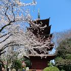 Hokke-ji Temple(JP040) icon