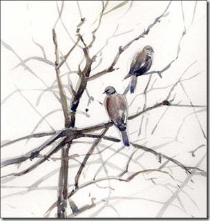 pigeons bg