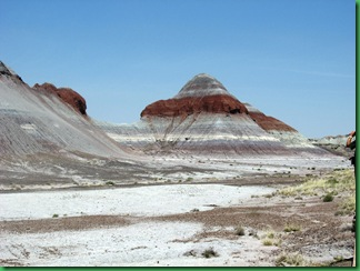 Painted Desert & Petrified Forest 081