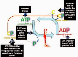 Benzodiacepinas metabolismo