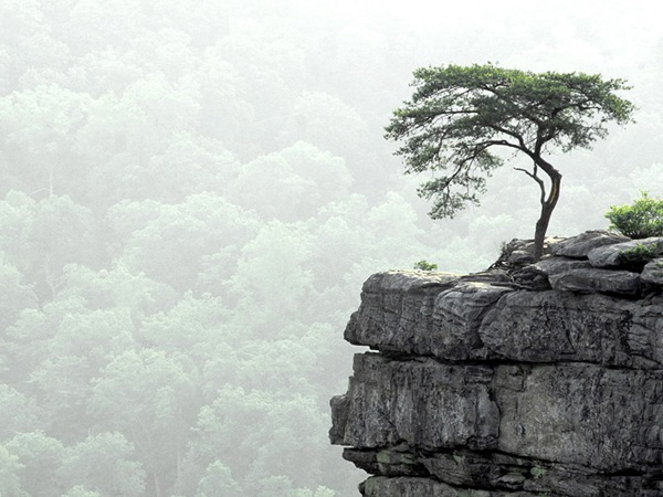 a-single-tree-on-cliff
