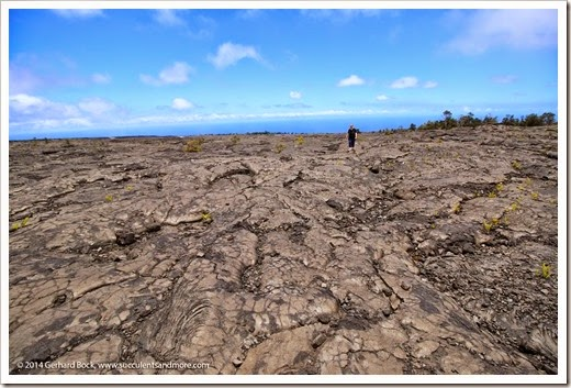 140724_HawaiiVolcanoesNP_0033