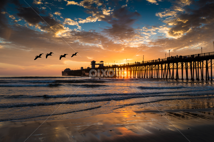 Pelican Overflight by Alan Crosthwaite - Landscapes Beaches ( oceanside, peaceful, southern california, waves, pacific ocean, tourism, ocean, travel, coastal, gliding, destination, piers, serenity, sunset, overflight, pelicans, pier )