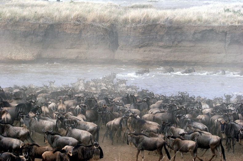 mara-river-crossing-12