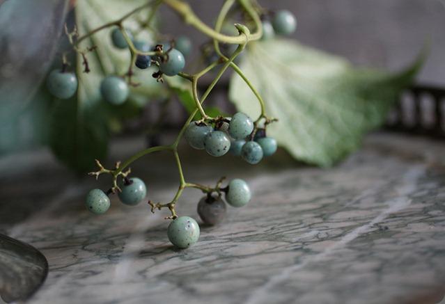 porcelain berries saipua  5021551159_4c76172783_z